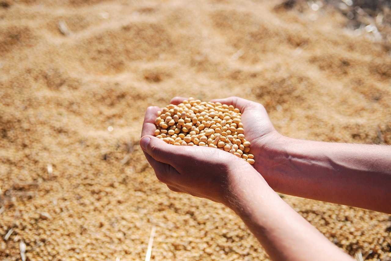 Brazil seeks Chinese export permits for dozens of soy